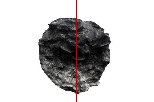 Serie : Seguindo Uma LinhaTitolo: tronco#2